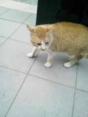 佐藤未帆 (しながわてれび出演ブログ) 公式ブログ/ケンカする猫 画像1