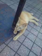 佐藤未帆 (しながわてれび出演ブログ) 公式ブログ/街猫 画像1