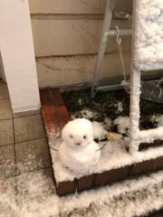 佐藤未帆 (しながわてれび出演ブログ) 公式ブログ/雪 画像2