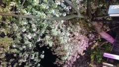 佐藤未帆 (しながわてれび出演ブログ) 公式ブログ/風 画像2