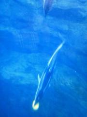 佐藤未帆 (しながわてれび出演ブログ) 公式ブログ/海遊館 イルカ (カマイルカ) 画像2
