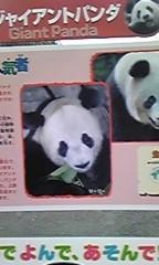 佐藤未帆 (しながわてれび出演ブログ) 公式ブログ/パンダ 画像1
