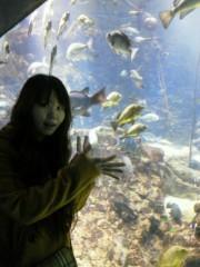 佐藤未帆 (しながわてれび出演ブログ) 公式ブログ/海遊館 ペンギン 画像3