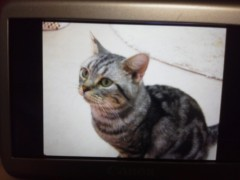 佐藤未帆 (しながわてれび出演ブログ) 公式ブログ/にゃんこ 画像2