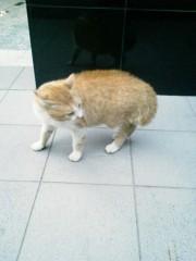 佐藤未帆 (しながわてれび出演ブログ) 公式ブログ/猫 画像2