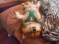 アクア新渡戸 公式ブログ/Tico dead sleep 画像1
