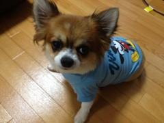 アクア新渡戸 公式ブログ/可愛過ぎ! 画像1