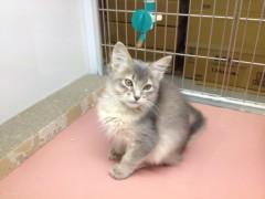 アクア新渡戸 公式ブログ/猫も可愛い 画像1
