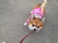 アクア新渡戸 公式ブログ/お散歩 画像1
