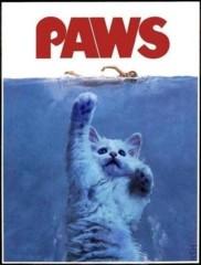 アクア新渡戸 公式ブログ/猫が怖くなった(笑) 画像1