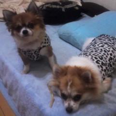 アクア新渡戸 公式ブログ/アニマルがアニマル柄を着ている! 画像1