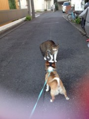 アクア新渡戸 公式ブログ/息子の散歩中 画像1