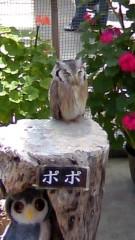 近藤さゆの 公式ブログ/鳥さん特集(^O^) 画像1