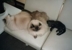 川上麻衣子 公式ブログ/猫のお話 画像1
