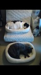 川上麻衣子 公式ブログ/気分次第の二段ベッド 画像2