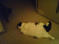 川上麻衣子 公式ブログ/猫たちのご飯は 画像1