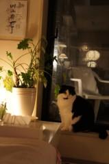 川上麻衣子 公式ブログ/ネコの楽園 画像1