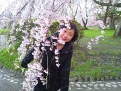 川上麻衣子 公式ブログ/満開の弘前ー5 画像1