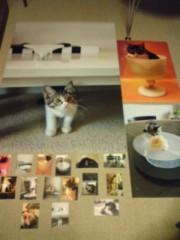 川上麻衣子 公式ブログ/ポストカード到着 画像1