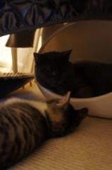 川上麻衣子 公式ブログ/仲良しネコたち 画像3