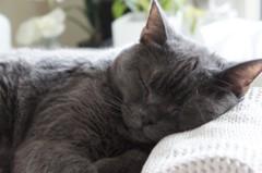 川上麻衣子 公式ブログ/猫取材 画像1