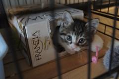 川上麻衣子 公式ブログ/仔猫日記1 画像2