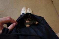 川上麻衣子 公式ブログ/仔猫日記2 画像1