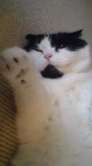 川上麻衣子 公式ブログ/招き猫 画像1