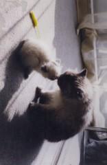 川上麻衣子 公式ブログ/共に支え合いましょう 画像1