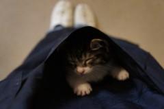 川上麻衣子 公式ブログ/仔猫日記2 画像2