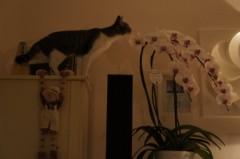 川上麻衣子 公式ブログ/我が家でネコカフェ 画像2