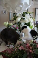川上麻衣子 公式ブログ/猫VS花 画像1