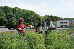 川上麻衣子 公式ブログ/古民家の旅 画像1