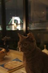 川上麻衣子 公式ブログ/我が家でネコカフェ 画像3