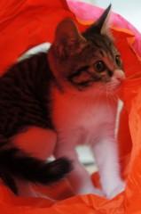 川上麻衣子 公式ブログ/仲良しネコたち 画像2