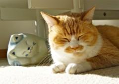 川上麻衣子 公式ブログ/猫・ねこ写真展  画像3