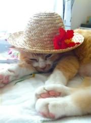 川上麻衣子 公式ブログ/猫取材 画像3