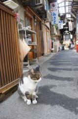 川上麻衣子 公式ブログ/谷中散歩 画像2