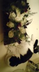 川上麻衣子 公式ブログ/ありがとう 画像2