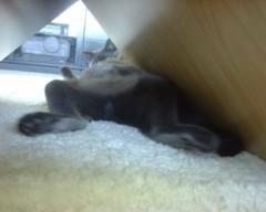 川上麻衣子 プライベート画像/LYCKA&AQUA テーブルの下のリッカ