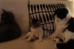 川上麻衣子 公式ブログ/深夜になりました。 画像2