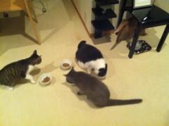 川上麻衣子 公式ブログ/猫カフェ誕生日 画像2