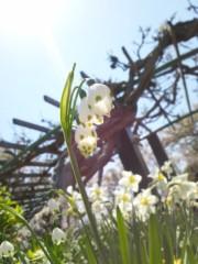 川上麻衣子 公式ブログ/桜 画像2