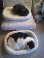 川上麻衣子 公式ブログ/気分次第の二段ベッド 画像1