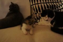川上麻衣子 公式ブログ/仲良しネコたち 画像1