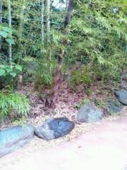 川上麻衣子 公式ブログ/おはようございます。 画像1