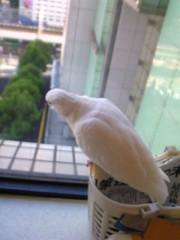 小泉ポロン 公式ブログ/高所好き? 画像2
