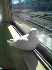 小泉ポロン 公式ブログ/乗り換え〜30分待ち 画像1