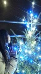 小泉ポロン 公式ブログ/リアルクリスマスツリー 画像1
