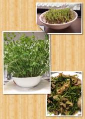 小泉ポロン 公式ブログ/収穫の日 画像1